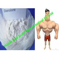 China Stanozolol Winstrol Bulking Cycle Steroids , GMP white crystalline powder wholesale