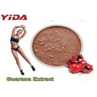China Guarana Extract Natural Weight Loss Steroids 10% 20% Purity Reduced Appetite wholesale
