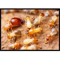 Quality High Effect Professional Termite Treatment CAS 120068-37-3 Fipronil 0.5% DP for sale