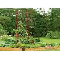 China Durable Garden Metal Tomato Cages wholesale