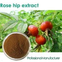 China Factory Rosehip Seed Oil,Rose Hips Seed Oil , Rose Hips Oil wholesale