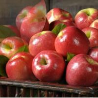 China PINK LADY APPLES NO.30 deliver gift hamper to shenzhen wholesale